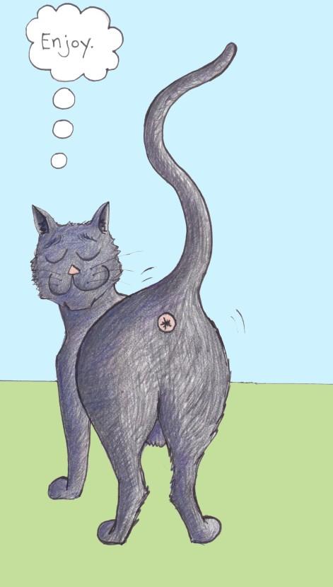 cat butthole 2